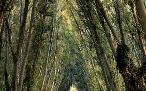 Δάσος Νέστου